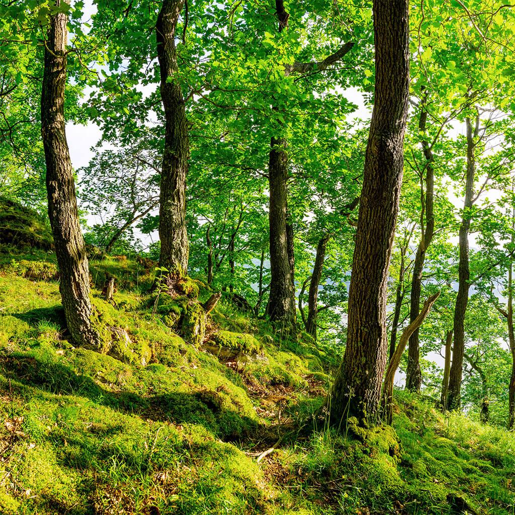Der Schutz unserer Umwelt ist ein bedeutender Bestandteil unseres unternehmerischen Handelns.